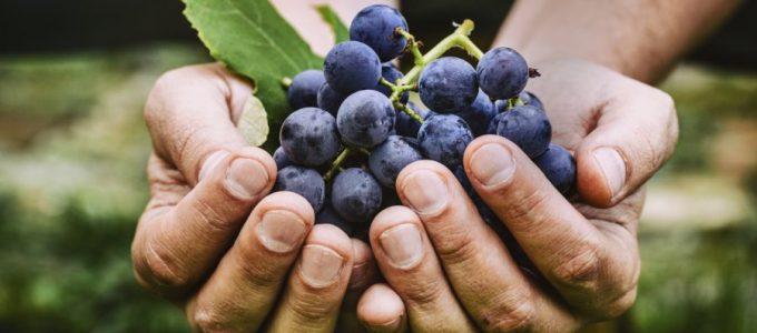 Terapia del vino. Come curare la pelle in modo chiaro?